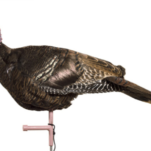 hen turkey decoy