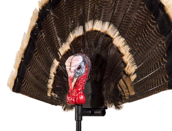 Gobbler Fan Turkey Decoy